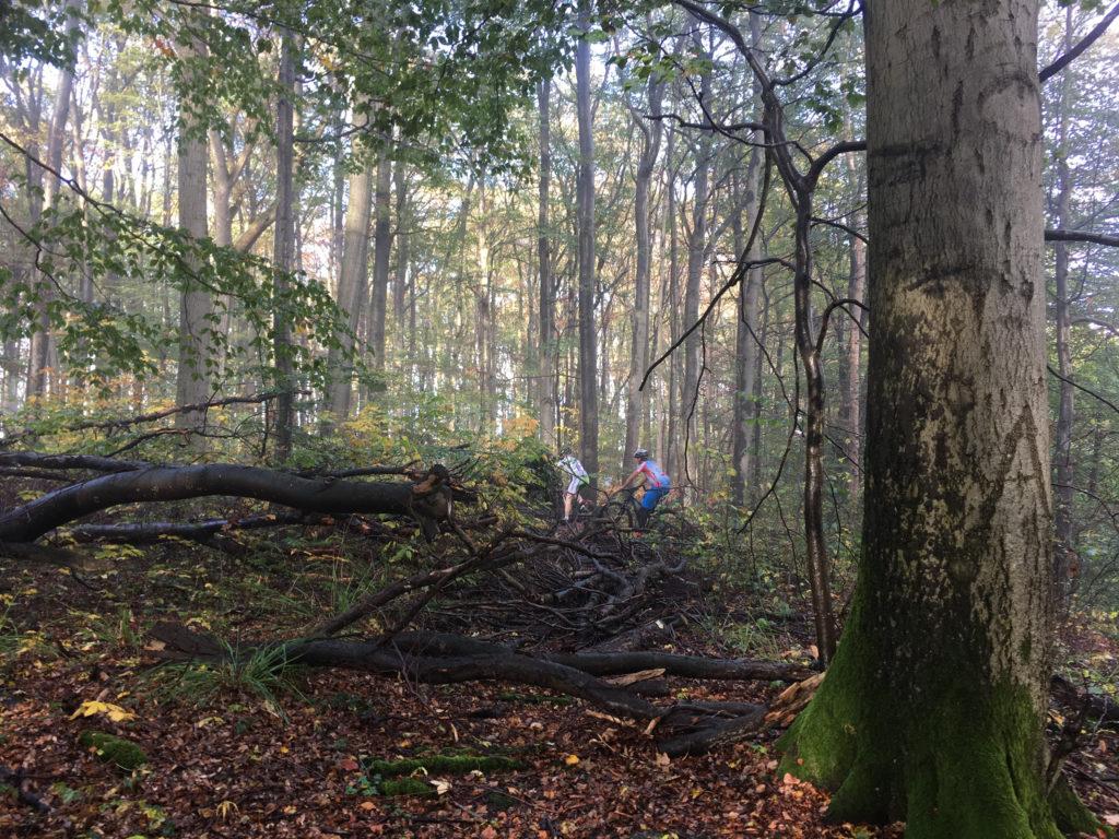 Verschwunden im Unterholz