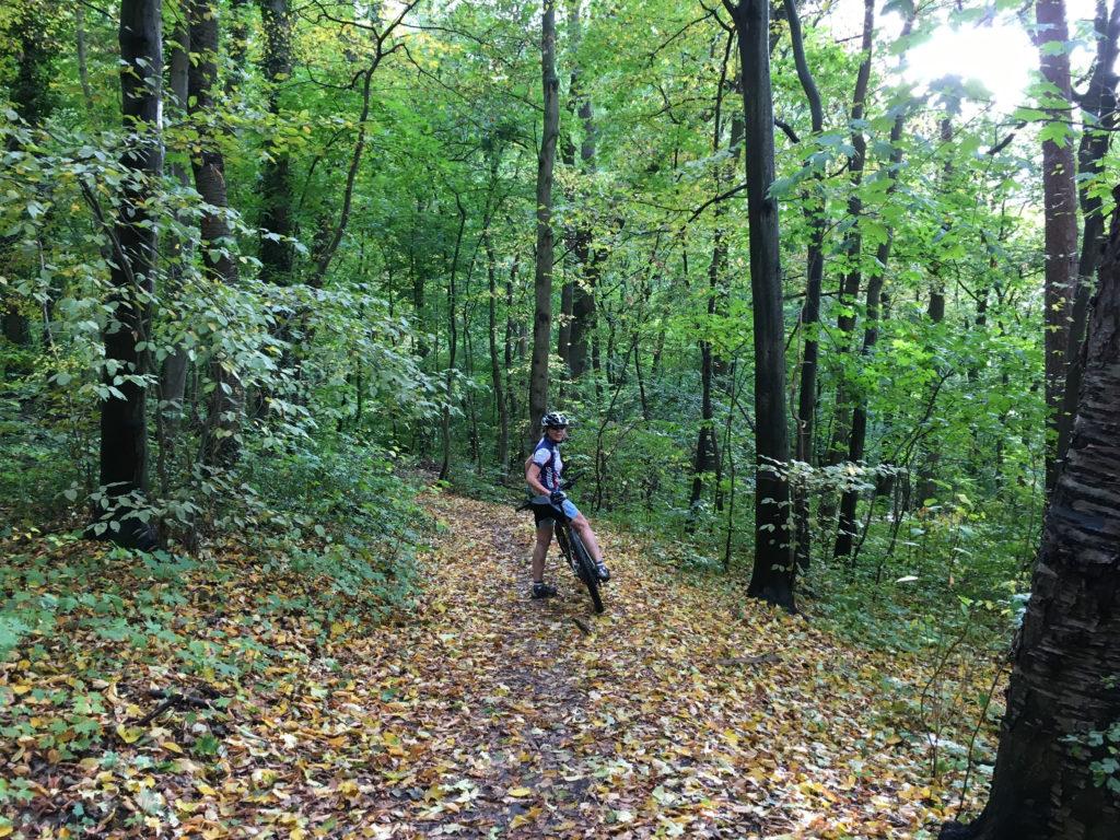 Die Blätter fallen bunt und freiwillig