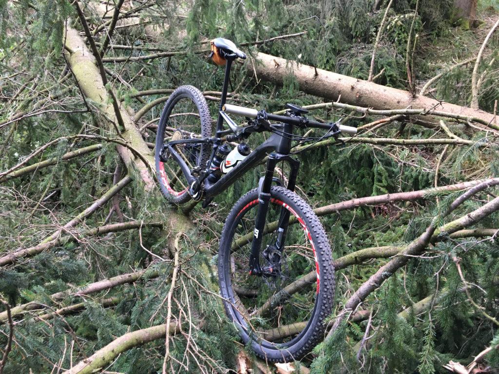 Windbruch im Harz